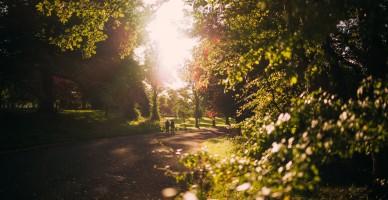 Pleasant park scene in Belfast